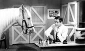 No Talking Horse for Tesco