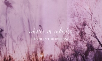 Whales in Cubicles - Death in the Evening
