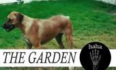 The Garden – HaHa